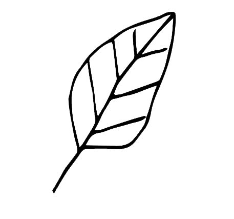 small-leaf-icon-right-home-page